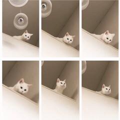 猫と暮らす/玄関吹き抜け ここからとべるかニャ〜 ダメだよーー!