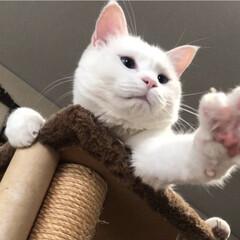 キャットタワー/猫と暮らす 待っておくんなさい〜おっかさん