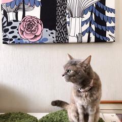 ファブリックパネル手作り/猫との暮らし/ねこと暮らす/DIY 玄関のパネル作り替えました! だって前の…