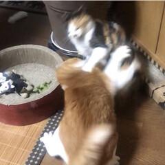 ガリガリサークル/きょうだいゲンカ/猫と暮らす なにするのー❗️やめてよーー‼️