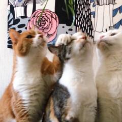 草お食事会/新鮮お食事会/ねこと暮らす/猫との暮らし/ねことの暮らし/ファブリックパネル手作り/... 🌱く🌱さ🌱お食事会はヤロウにゃんズのふた…(7枚目)