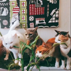 猫のいる暮らし/エノコログサ/ペット/猫 やっと撮れた4ニャン勢揃いの新鮮お食事会…
