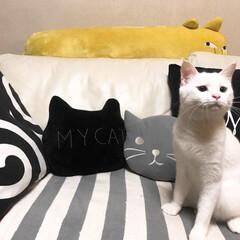 スリコクッション/抱き枕/猫と暮らす ニャンコだらけ