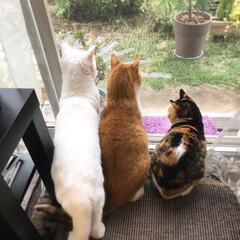 猫と暮らす/ペット なんだ なんだ! よそのコが庭に来たので…