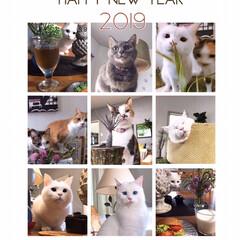 年賀状/あけおめ/ペット/猫/にゃんこ同好会/年末年始 2019年がスタートしました! 今年もよ…