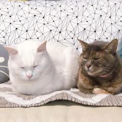 セルフペイント壁/ファブリックパネル手作り/猫との暮らし/ねこと暮らす ソファーはボク、ワタシ達のもんニャ!(5枚目)