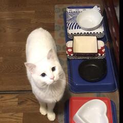 猫と暮らす かーたん ごはん🍚ちょ〜らい〜