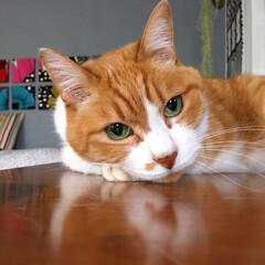 茶トラハチワレ/ファブリックパネル手作り/セルフペイント壁/ねことの暮らし/猫との暮らし/ねこと暮らす/... 次のごはんが待ち遠しいニャ。。(3枚目)