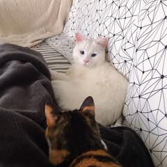 ねことの暮らし/猫との暮らし ニャンコ関係 その時によって強い弱いが変…(3枚目)