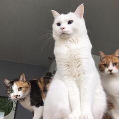 LIMIAペット同好会/フォロー大歓迎/ペット/ペット仲間募集/猫/にゃんこ同好会/... 今日は猫の日🎊🎊🎊✨✨✨ ねこ年制定に向…