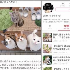 猫との暮らし/雨季ウキフォト投稿キャンペーン/LIMIAペット同好会/にゃんこ同好会/LIMIA/LIMIAトレンドライフ 昨日「LIMIAトレンドライフ」で紹介し…