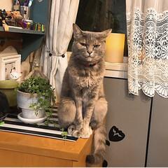 猫と暮らす/インテリア ウチにはこんなかわいい(親バカ) ニャン…(1枚目)