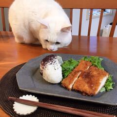 ねこと暮らす/猫との暮らし/皿 昨日信楽の古谷製陶所で買ったお皿で朝ごは…