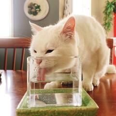 テーブル/猫と暮らす/ペット テーブルの上に水飲み場があるねん❤️(1枚目)