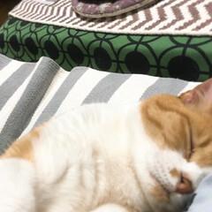 猫と暮らす/ペット ムニャ…ママ好きニャー💕💕ベッタリ 嬉…