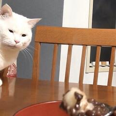 セルフペイント壁/ねこと暮らす/猫との暮らし ぜんざいをこわがってる…? (笑)