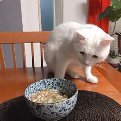 ダイエット食/猫との暮らし/ご飯 痩せると聞いた 🍚+めかぶ+納豆+卵 を…