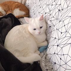 ねことの暮らし/猫との暮らし ニャンコ関係 その時によって強い弱いが変…(2枚目)