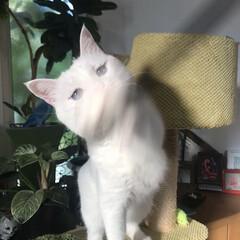 しろねこ/ねこと暮らす/ねことの暮らし/猫 おりゃあぁぁぁーー!(5枚目)
