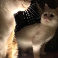 猫と暮らす/ペット ペコ兄怖いじょ〜〜💦