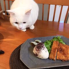 ねこと暮らす/猫との暮らし/皿 昨日信楽の古谷製陶所で買ったお皿で朝ごは…(2枚目)