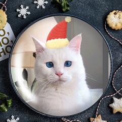 ねことの暮らし/しろねこ/クリスマス2019 みんニャ素敵なXmas過ごしたかニャ?
