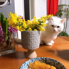 ねこと暮らす/猫との暮らし 飼い主の手抜き朝ごはんを見守る。。 🐱ヤ…