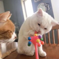 セルフペイント壁/猫との暮らし/ねこと暮らす/ねことの暮らし/タイガーコペンハーゲン なんニャこれは⁉️(5枚目)