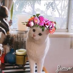 猫と暮らす/シンデレラフィット このアプリ可愛くって好き〜❤️ 子供ちゃ…
