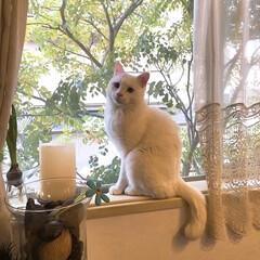 窓辺/猫と暮らす/ペット すっかり春だニャ🌸