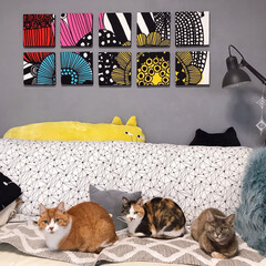 セルフペイント壁/ファブリックパネル手作り/猫との暮らし/ねこと暮らす ソファーはボク、ワタシ達のもんニャ!