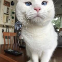 猫と暮らす 美味しそうなん ちょ〜だいニャ〜