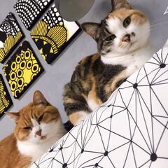 ファブリックパネル手作り/ファブリックパネル/きょうだい猫/ねことの暮らし ペコ兄 暑いからくっつかないでよ!(1枚目)