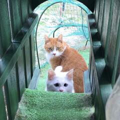 猫と暮らす/キャットラン/ペット 1階和室のサッシを少し開けると、庭のキャ…