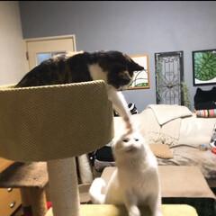 猫と暮らす/キャットタワー モニターするからもらったキャットタワー✨…