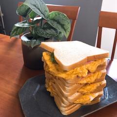 サンドイッチ/しろねこ/ねこと暮らす/ねことの暮らし サンドイッチ作ったよ〜 1枚目は中身だよ…(2枚目)