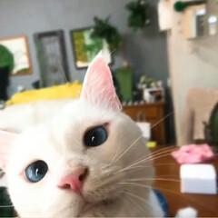 猫と暮らす/ねこ多頭飼い/ペット ☀️4ニャンの日常☀️