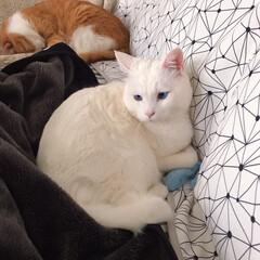 ねことの暮らし/猫との暮らし ニャンコ関係 その時によって強い弱いが変…