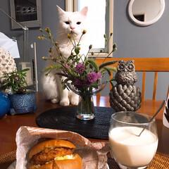 飼い主ごはん見守り隊/ペット/ペット仲間募集/猫/にゃんこ同好会/フード 最近の朝ごはんを一気に! かーたん食べ過…