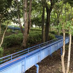 水蓮池/水蓮/早朝ウォーキング/散歩コース 今朝のウォーキングはご近所の水蓮池へ🐾🐾…(7枚目)