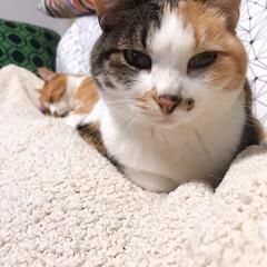 きょうだい猫/ねこと暮らす/猫との暮らし ちょっと〜 あのひと寝てばっかりよ💢 つ…(6枚目)