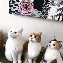 エノコログサ争奪戦/エノコログサ/ねこ/猫/ねこと暮らす/猫との暮らし やったにゃ!今日はエノコロのお土産ニャ❤️(1枚目)