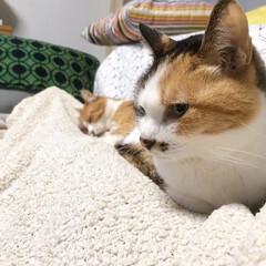 きょうだい猫/ねこと暮らす/猫との暮らし ちょっと〜 あのひと寝てばっかりよ💢 つ…(2枚目)