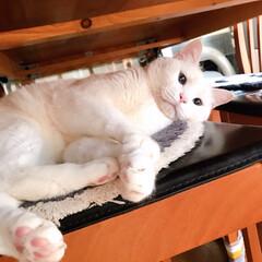 ねこと暮らす/猫との暮らし/ねことの暮らし おはにゃんございます🐱✨ パフェ姐のおケ…