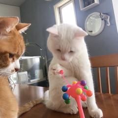 セルフペイント壁/猫との暮らし/ねこと暮らす/ねことの暮らし/タイガーコペンハーゲン なんニャこれは⁉️(3枚目)