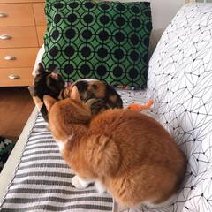 ねことの暮らし/猫との暮らし ニャンコ関係 その時によって強い弱いが変…(6枚目)