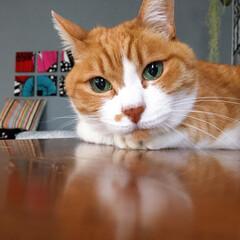 茶トラハチワレ/ファブリックパネル手作り/セルフペイント壁/ねことの暮らし/猫との暮らし/ねこと暮らす/... 次のごはんが待ち遠しいニャ。。