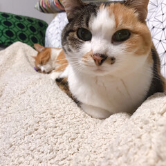 きょうだい猫/ねこと暮らす/猫との暮らし ちょっと〜 あのひと寝てばっかりよ💢 つ…(5枚目)
