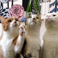 草お食事会/新鮮お食事会/ねこと暮らす/猫との暮らし/ねことの暮らし/ファブリックパネル手作り/... 🌱く🌱さ🌱お食事会はヤロウにゃんズのふた…(6枚目)
