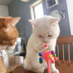 セルフペイント壁/猫との暮らし/ねこと暮らす/ねことの暮らし/タイガーコペンハーゲン なんニャこれは⁉️(4枚目)